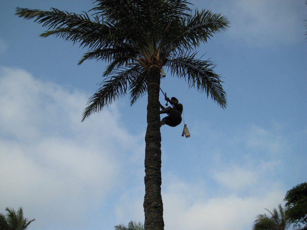 Palmsap tapper