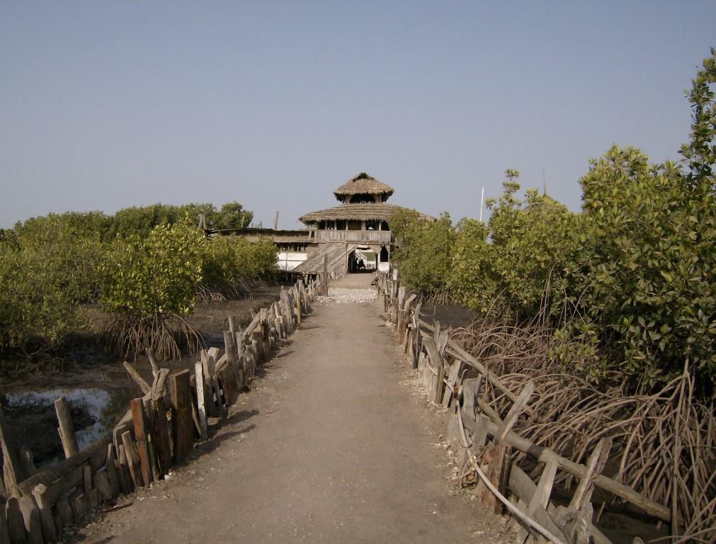 Mongrove (Medium)